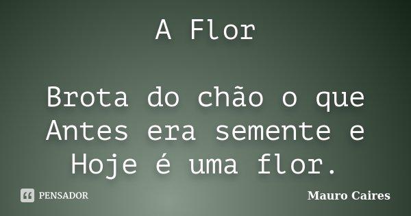 A Flor Brota do chão o que Antes era semente e Hoje é uma flor.... Frase de Mauro Caires.