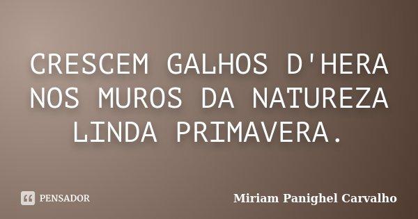 CRESCEM GALHOS D'HERA NOS MUROS DA NATUREZA LINDA PRIMAVERA.... Frase de Miriam Panighel Carvalho.