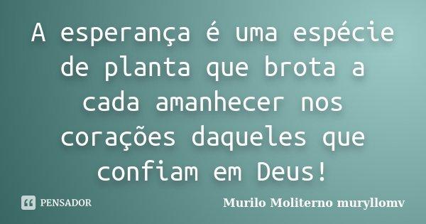 A esperança é uma espécie de planta que brota a cada amanhecer nos corações daqueles que confiam em Deus!... Frase de Murilo Moliterno, muryllomv.