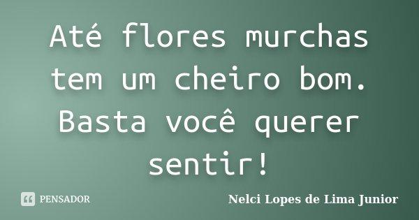 Até flores murchas tem um cheiro bom. Basta você querer sentir!... Frase de Nelci Lopes de Lima Junior.