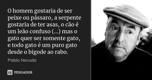 O homem gostaria de ser peixe ou pássaro, a serpente gostaria de ter asas, o cão é um leão confuso (...) mas o gato quer ser somente gato, e todo gato é um puro... Frase de Pablo Neruda.