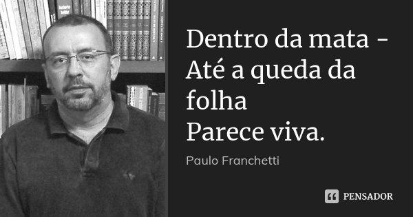 Dentro da mata - Até a queda da folha Parece viva.... Frase de Paulo Franchetti.