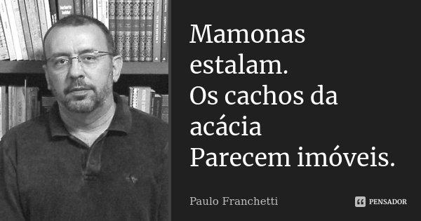 Mamonas estalam. Os cachos da acácia Parecem imóveis.... Frase de Paulo Franchetti.