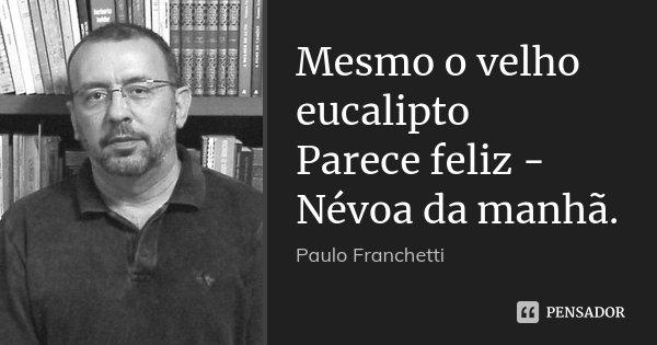 Mesmo o velho eucalipto Parece feliz - Névoa da manhã.... Frase de Paulo Franchetti.