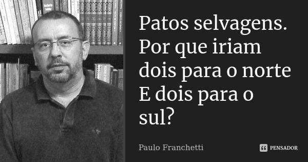 Patos selvagens. Por que iriam dois para o norte E dois para o sul?... Frase de Paulo Franchetti.