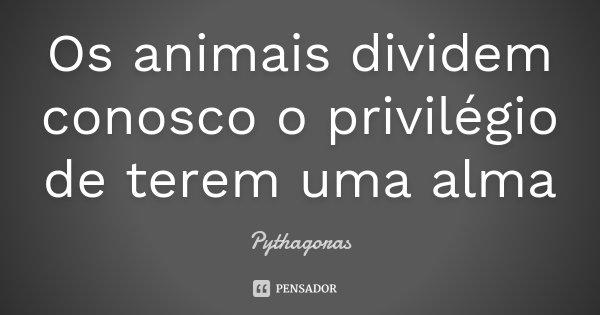 Os animais dividem conosco o privilégio de terem uma alma... Frase de Pythagoras.