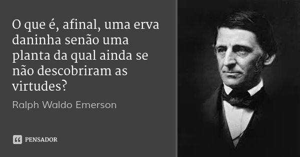 O que é, afinal, uma erva daninha senão uma planta da qual ainda se não descobriram as virtudes?... Frase de Ralph Waldo Emerson.