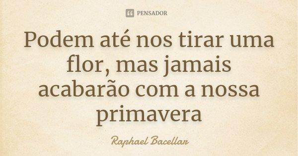 Podem até nos tirar uma flor, mas jamais acabarão com a nossa primavera... Frase de Raphael Bacellar.