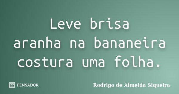 Leve brisa aranha na bananeira costura uma folha.... Frase de Rodrigo de Almeida Siqueira.