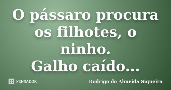 O pássaro procura os filhotes, o ninho. Galho caído...... Frase de Rodrigo de Almeida Siqueira.
