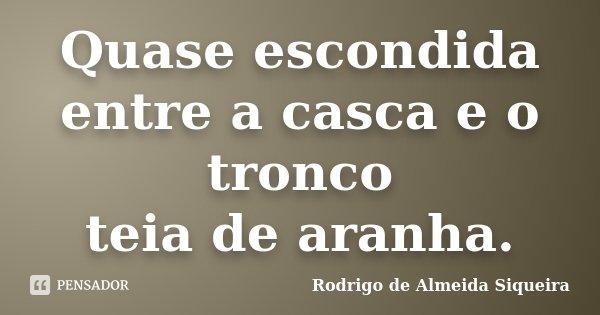 Quase escondida entre a casca e o tronco teia de aranha.... Frase de Rodrigo de Almeida Siqueira.