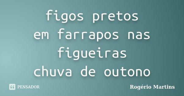 figos pretos em farrapos nas figueiras chuva de outono... Frase de Rogério Martins.
