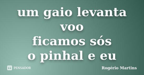 um gaio levanta voo ficamos sós o pinhal e eu... Frase de Rogério Martins.
