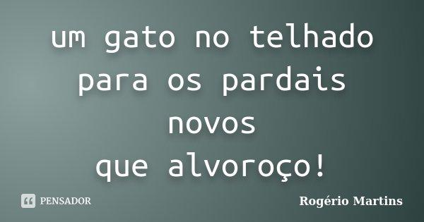 um gato no telhado para os pardais novos que alvoroço!... Frase de Rogério Martins.