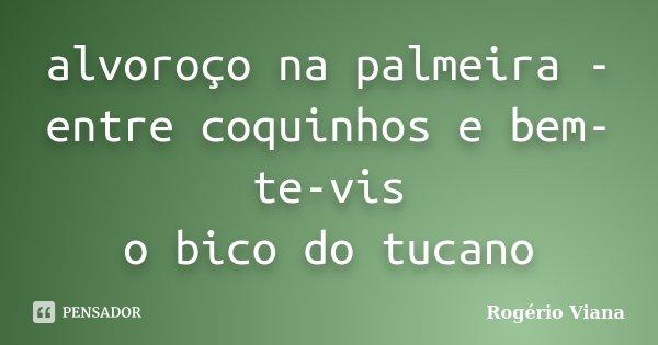 alvoroço na palmeira - entre coquinhos e bem-te-vis o bico do tucano... Frase de Rogério Viana.