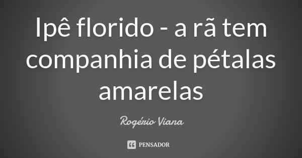 Ipê florido - a rã tem companhia de pétalas amarelas... Frase de Rogério Viana.