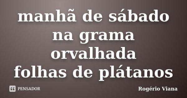 manhã de sábado na grama orvalhada folhas de plátanos... Frase de Rogério Viana.