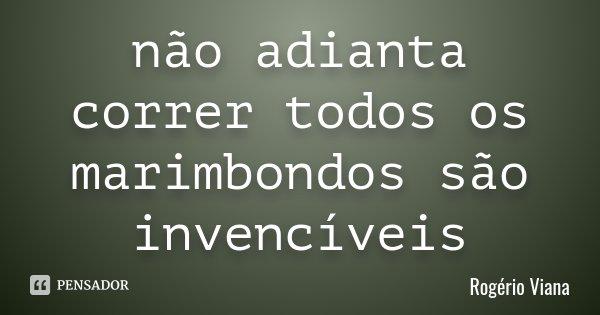 não adianta correr todos os marimbondos são invencíveis... Frase de Rogério Viana.