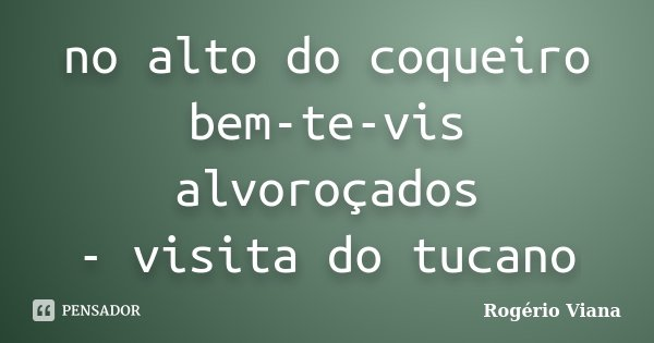 no alto do coqueiro bem-te-vis alvoroçados - visita do tucano... Frase de Rogério Viana.
