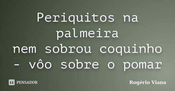 Periquitos na palmeira nem sobrou coquinho - vôo sobre o pomar... Frase de Rogério Viana.