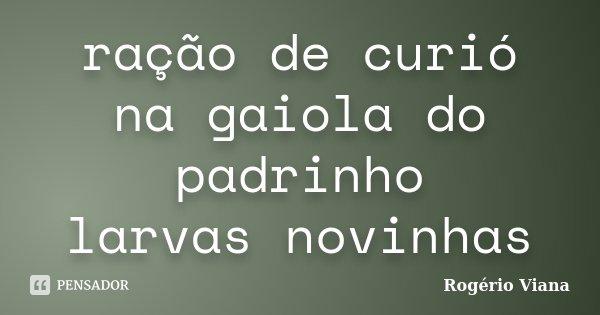 ração de curió na gaiola do padrinho larvas novinhas... Frase de Rogério Viana.