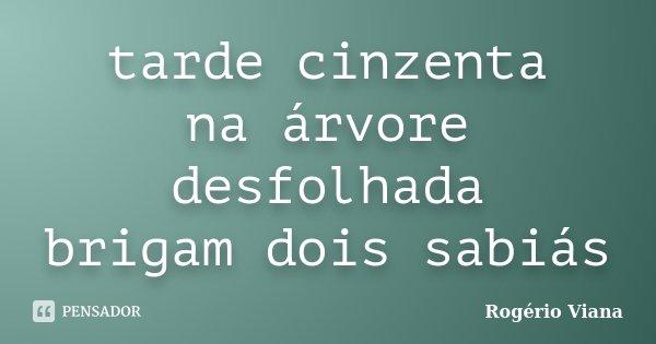 tarde cinzenta na árvore desfolhada brigam dois sabiás... Frase de Rogério Viana.