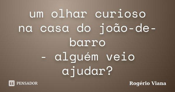 um olhar curioso na casa do joão-de-barro - alguém veio ajudar?... Frase de Rogério Viana.
