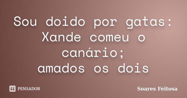 Sou doido por gatas: Xande comeu o canário; amados os dois... Frase de Soares Feitosa.