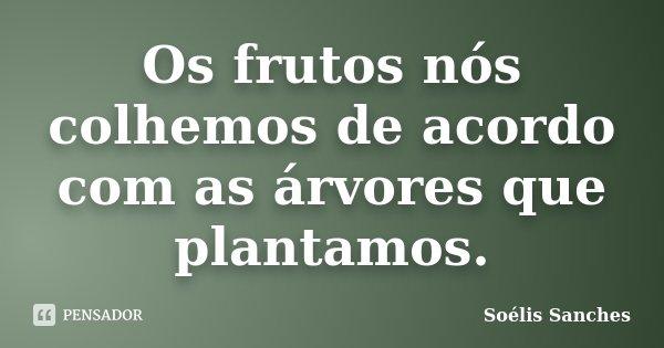 Os frutos nós colhemos de acordo com as árvores que plantamos.... Frase de Soélis Sanches.