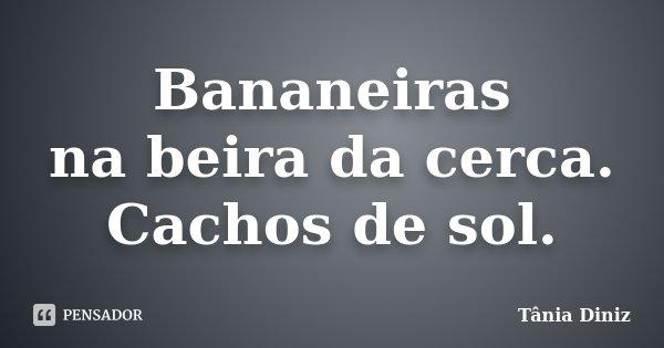 Bananeiras na beira da cerca. Cachos de sol.... Frase de Tânia Diniz.
