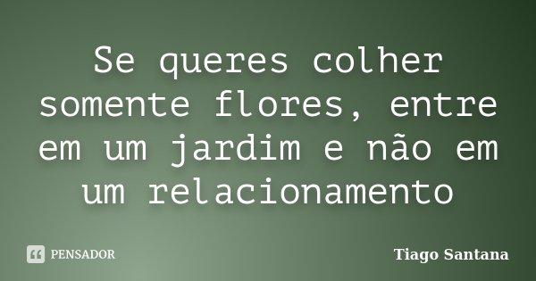 Se queres colher somente flores, entre em um jardim e não em um relacionamento... Frase de Tiago Santana.