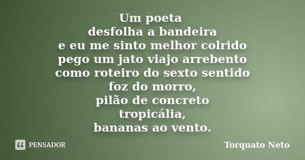 Um poeta desfolha a bandeira e eu me sinto melhor colrido pego um jato viajo arrebento como roteiro do sexto sentido foz do morro, pilão de concreto tropicália,... Frase de Torquato Neto.