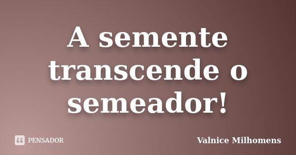 A semente transcende o semeador!... Frase de Valnice Milhomens.