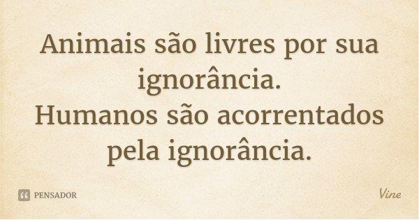 Animais são livres por sua ignorância. Humanos são acorrentados pela ignorância.... Frase de Vine.