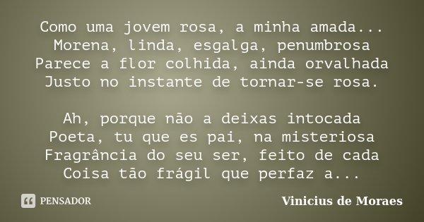 Como uma jovem rosa, a minha amada... Morena, linda, esgalga, penumbrosa Parece a flor colhida, ainda orvalhada Justo no instante de tornar-se rosa. Ah, porque ... Frase de Vinícius de Moraes.