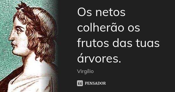 Os netos colherão os frutos das tuas árvores.... Frase de Virgílio.