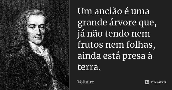Um ancião é uma grande árvore que, já não tendo nem frutos nem folhas, ainda está presa à terra.... Frase de Voltaire.
