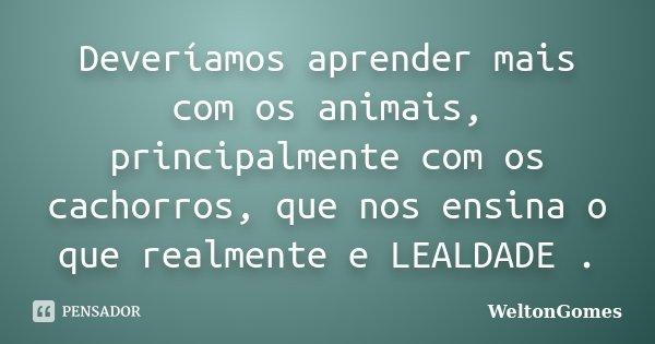 Deveríamos aprender mais com os animais, principalmente com os cachorros, que nos ensina o que realmente e LEALDADE .... Frase de WeltonGomes.