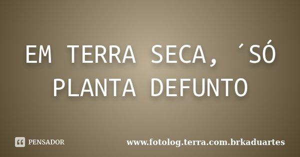 EM TERRA SECA, ´SÓ PLANTA DEFUNTO... Frase de www.fotolog.terra.com.brkaduartes.