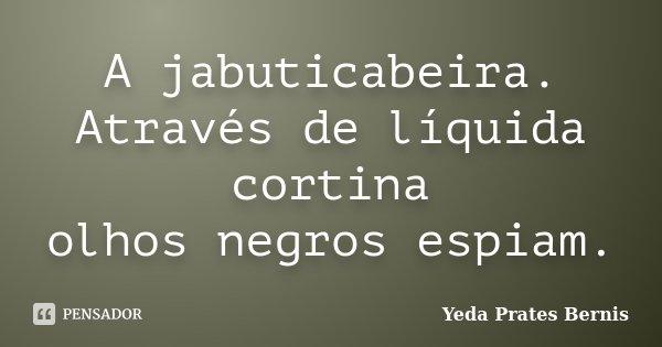 A jabuticabeira. Através de líquida cortina olhos negros espiam.... Frase de Yeda Prates Bernis.