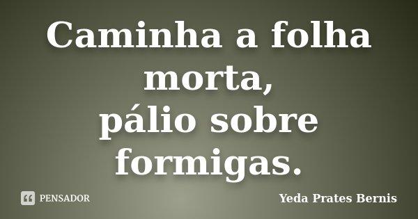 Caminha a folha morta, pálio sobre formigas.... Frase de Yeda Prates Bernis.