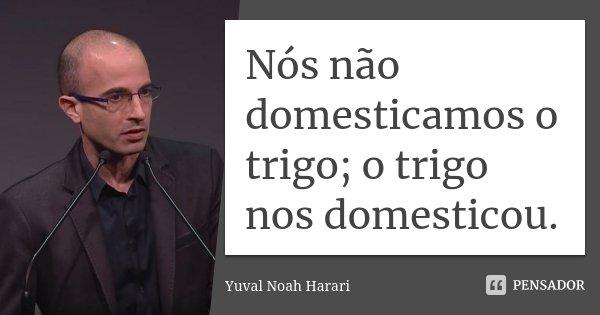 Nós não domesticamos o trigo; o trigo nos domesticou.... Frase de Yuval Noah Harari.