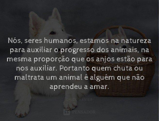 Nós, seres humanos, estamos na natureza para auxiliar o progresso dos animais, na mesma proporção que os anjos estão para nos auxiliar. Portanto quem chuta ou maltrata um animal é alguém que não aprendeu a amar.  Chico Xavier