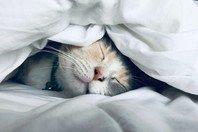 Bom dia engraçado! 30 frases e imagens para começar o dia rindo 😂