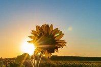 Bom dia! 75 mensagens e frases de bom dia para compartilhar
