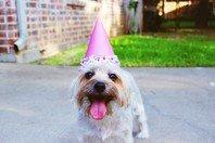 Como escrever a melhor mensagem de aniversário para quem você ama (com frases)