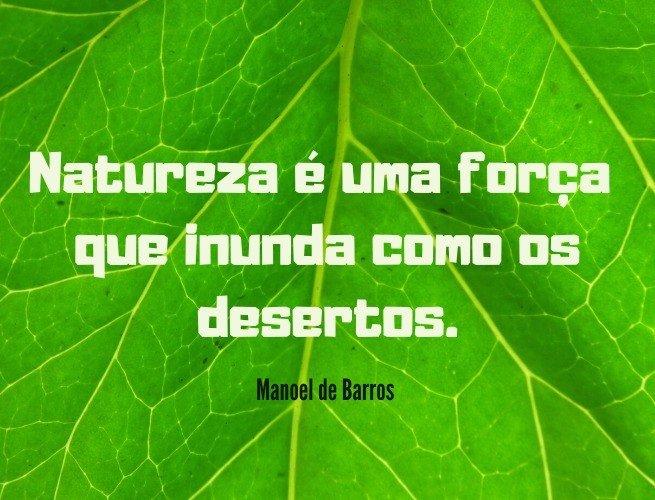 Natureza é uma força que inunda como os desertos.  Manoel de Barros
