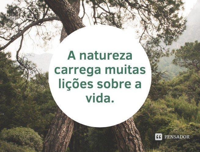 A natureza carrega muitas lições sobre a vida