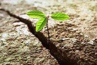 O que é resiliência e como é importante na nossa vida!