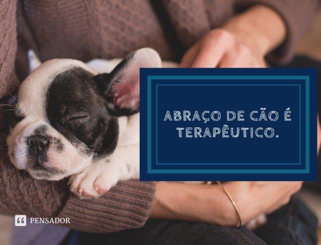 Abraço de cão é terapêutico.